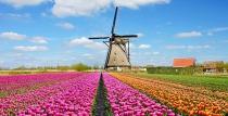 Пролет 2020 в Холандия и градините Кьокенхоф със самолет за 5 дни
